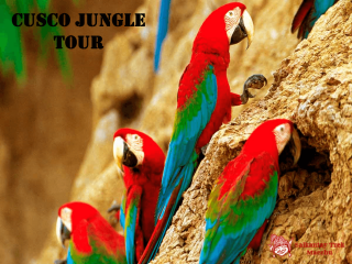 CUSCO JUNGLE TOUR